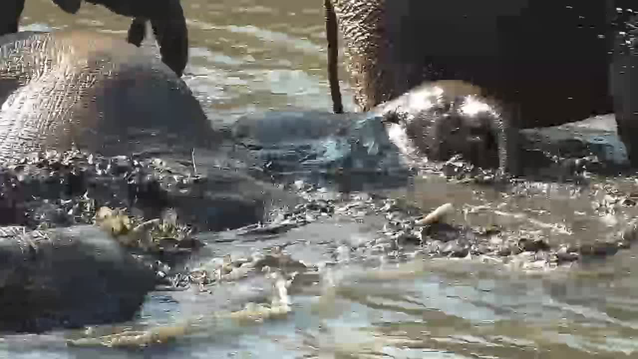 VIDEO: Elephant Pool Party