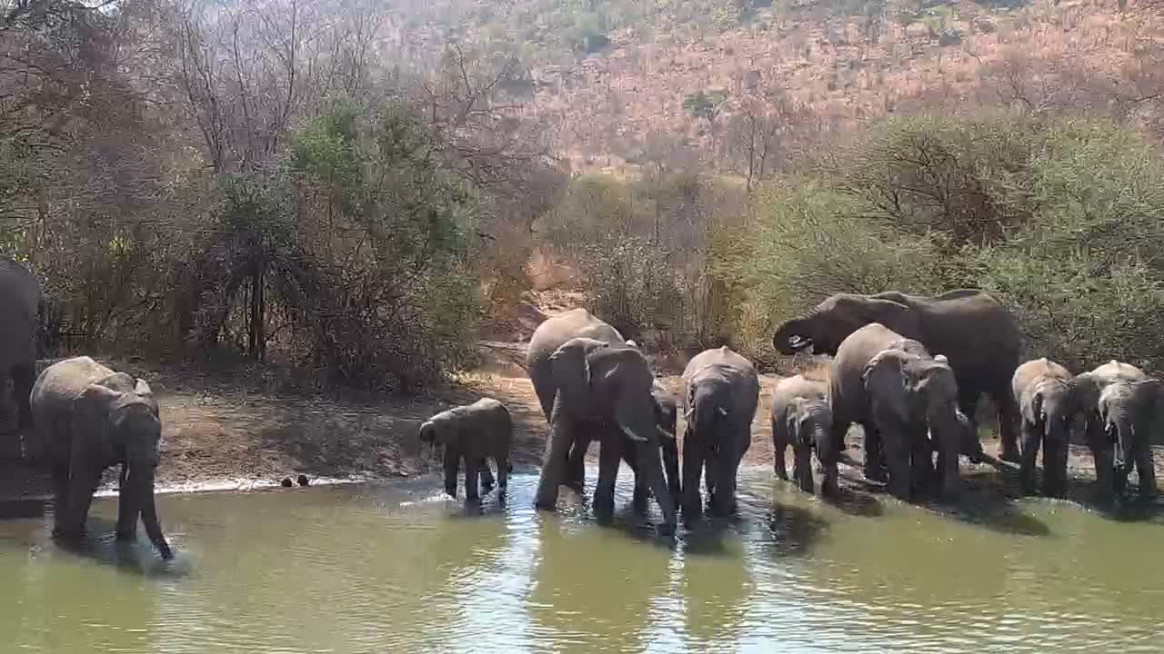 VIDEO: Elephant bath time at the pond