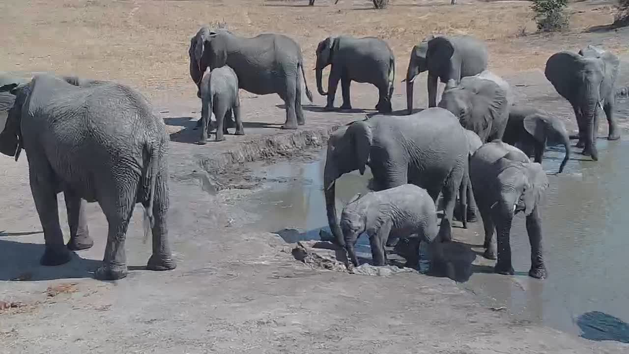VIDEO: Elephant  herd  came  for  a  drink  and  went  of again.