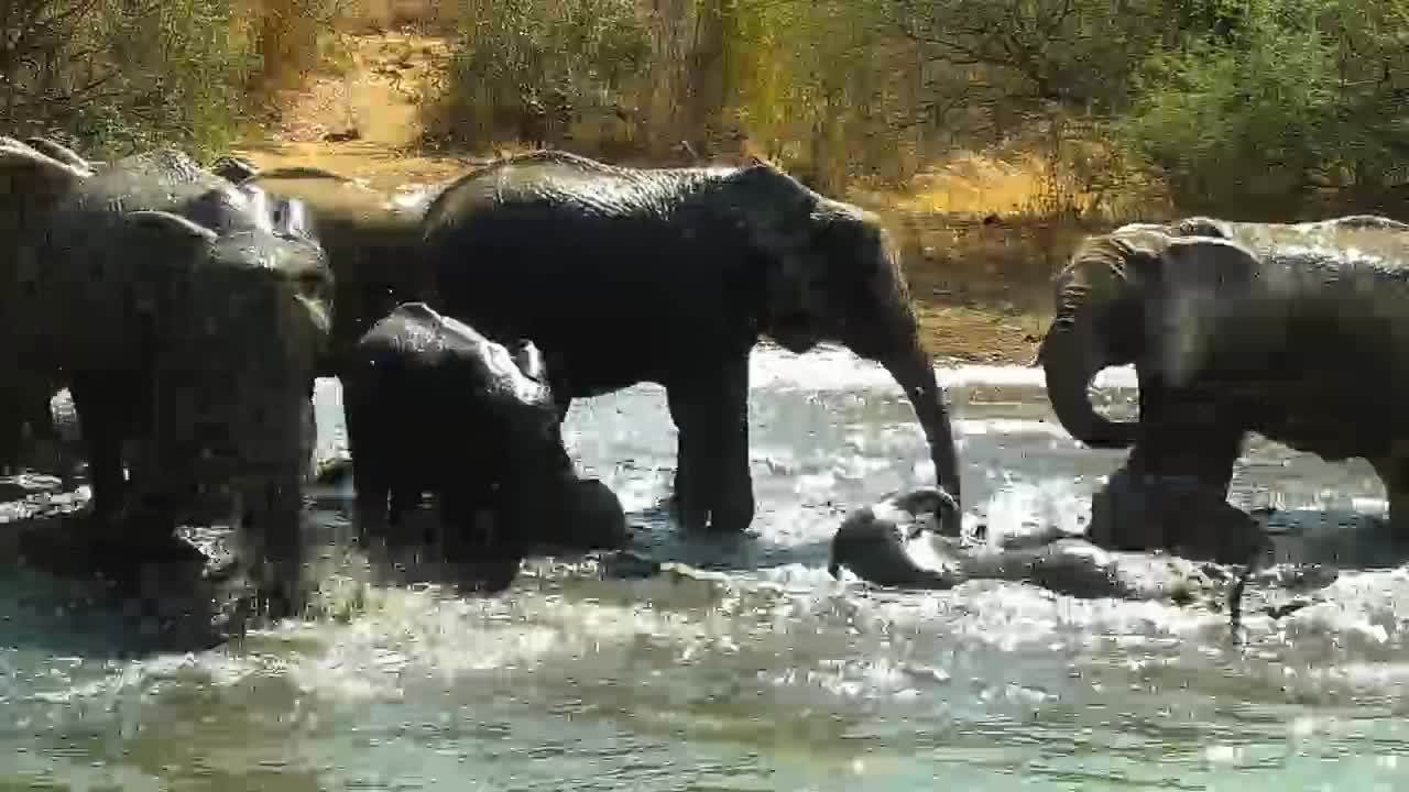VIDEO: Elephant herd cooling of at the pond