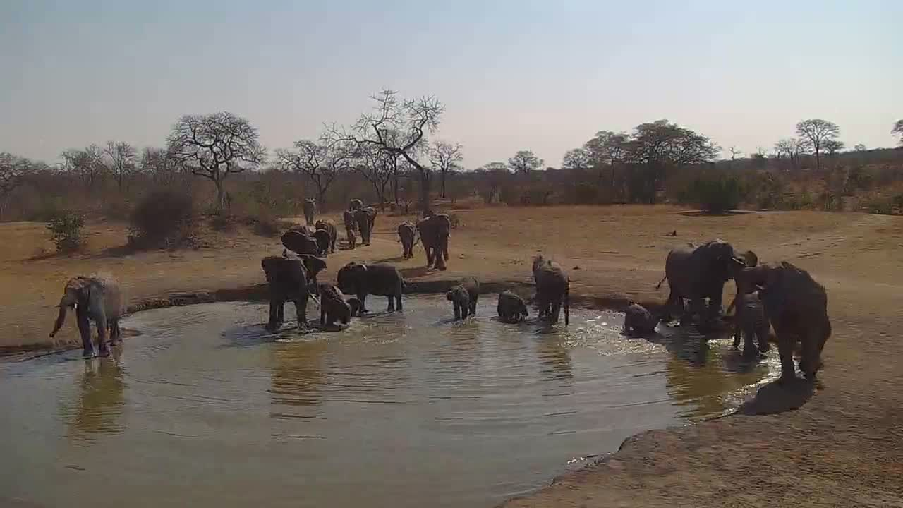 VIDEO:  Elephants coming for a quick drink