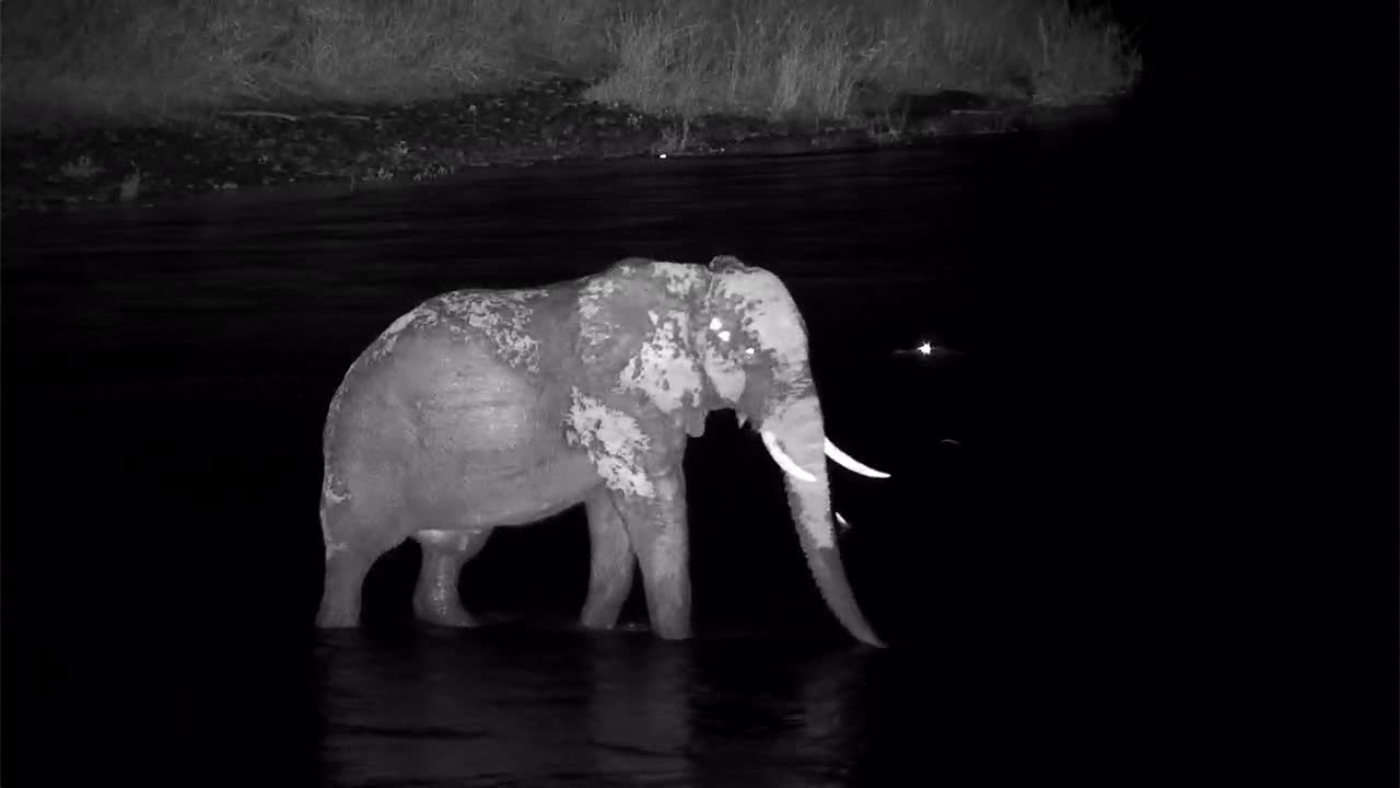 VIDEO: Elephant crossing the river and the crocodile watch him.
