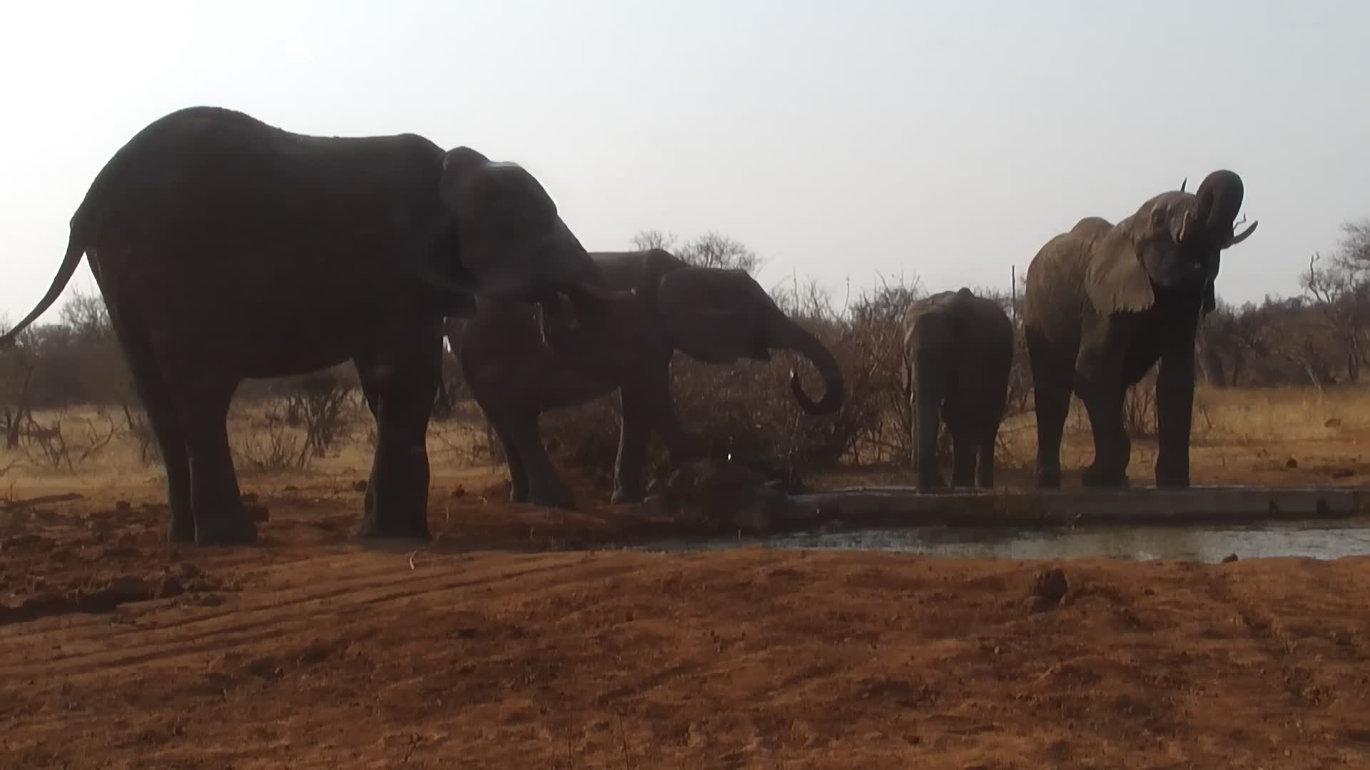 VIDEO: Elephant family in a rush