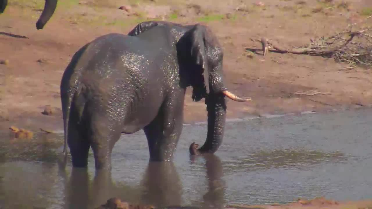 VIDEO:Elephants enjoying the water at Tembe