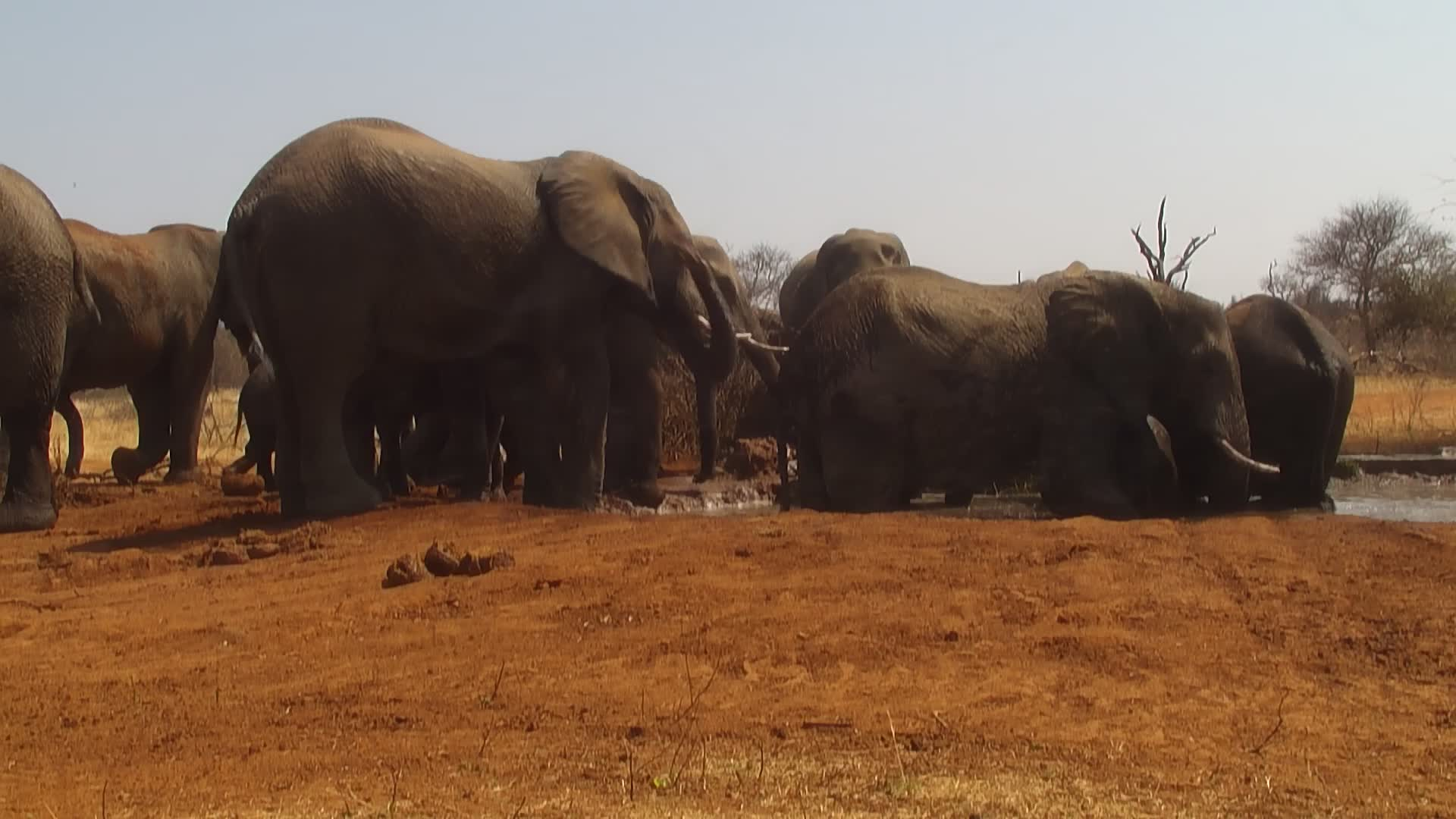 VIDEO: Elephant herd at the waterhole