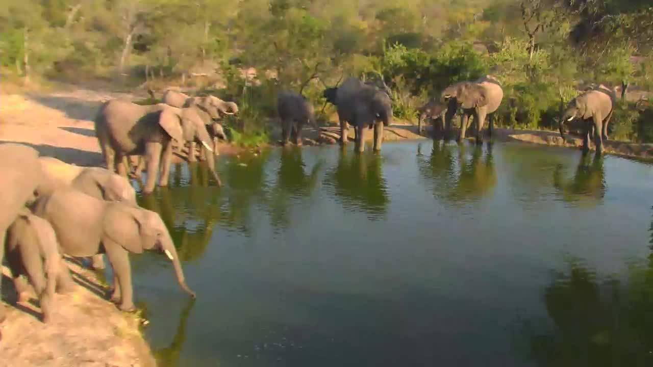 VIDEO:Elephant breeding herd with young came for some water