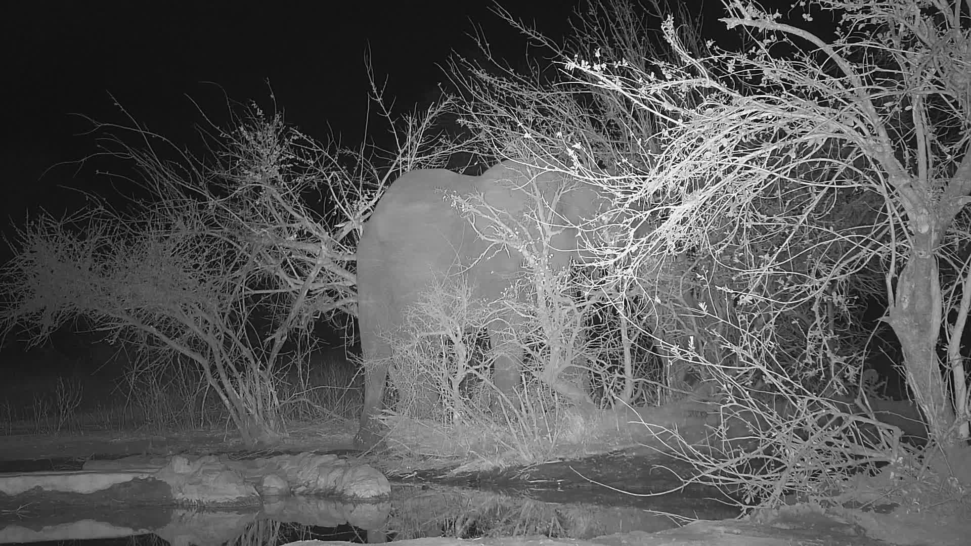 VIDEO: Elephant explores the bushes at the waterhole