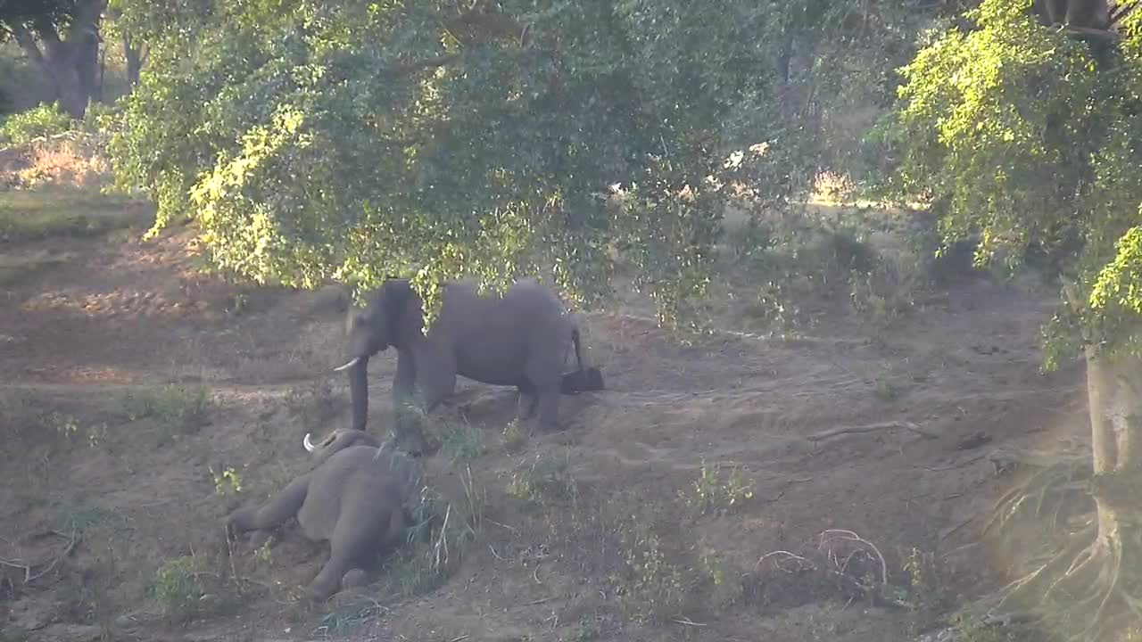 VIDEO:Elephants playing on the river bank