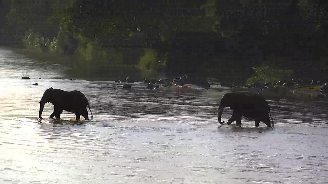 VIDEO:  Elephants crossing the river2