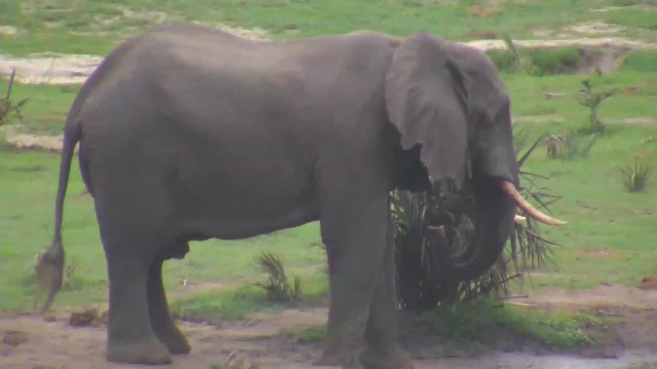 VIDEO: Elephant at Tembe