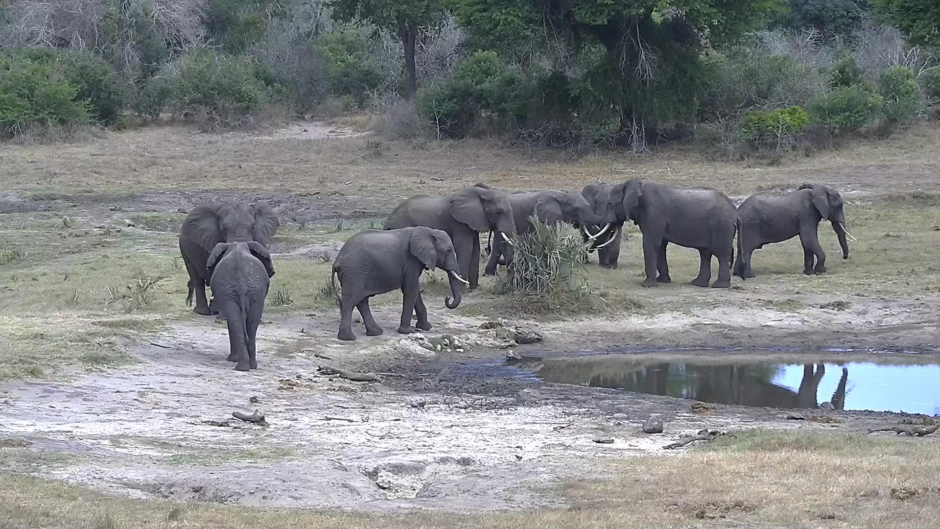 VIDEO: Elephants all frisky today