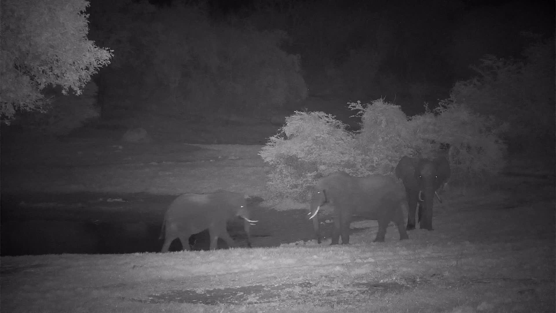 VIDEO: Bull Elephants sparring