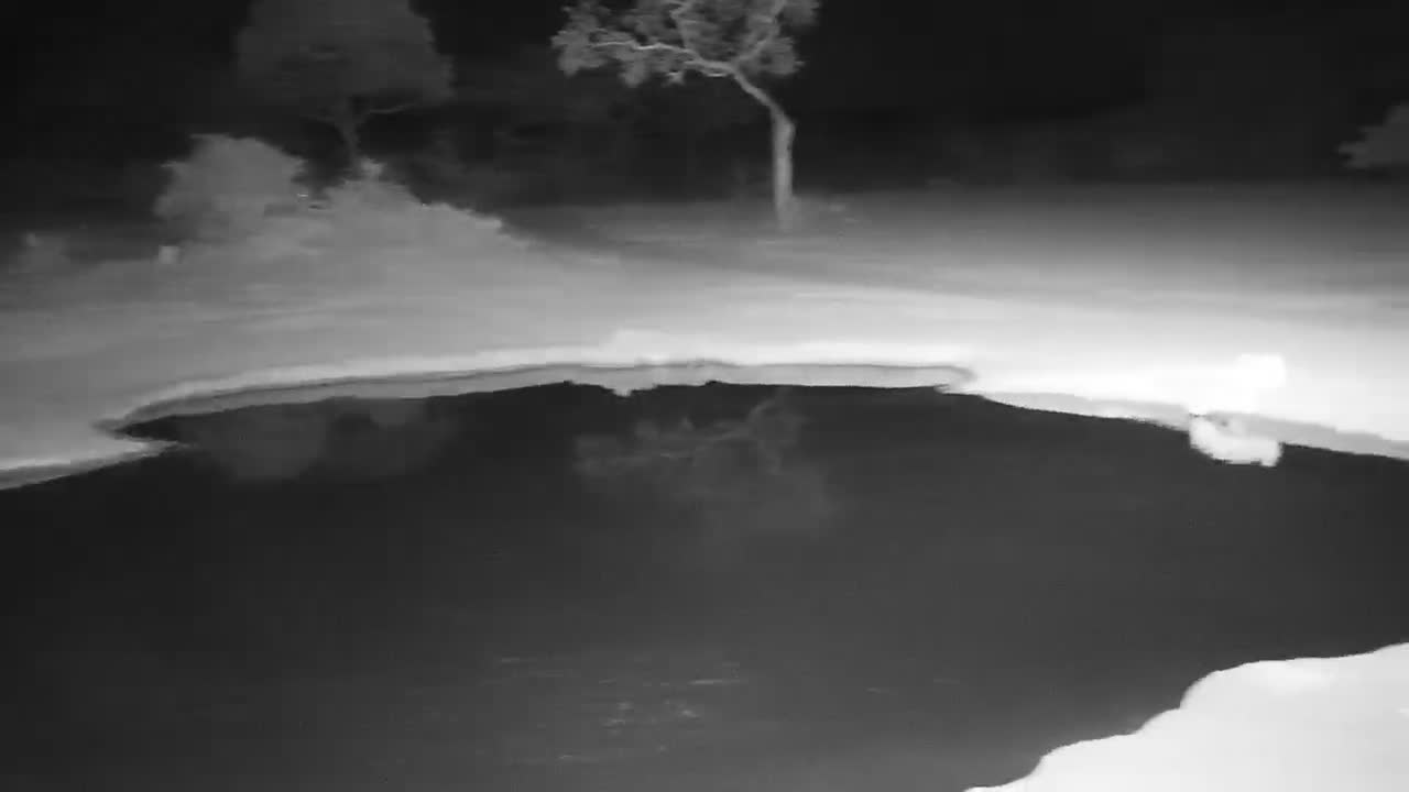 VIDEO: Lions arrive at the Waterhole with full bellies