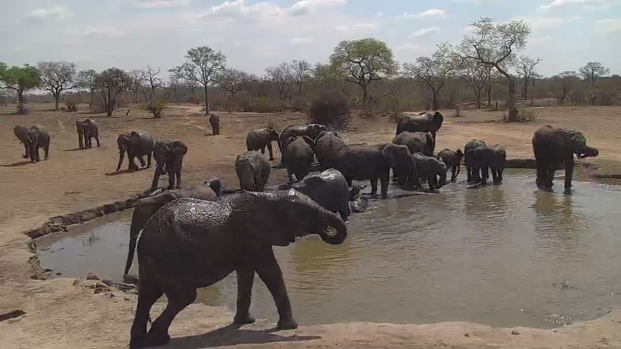 VIDEO: Elephant herd enjoying the water.