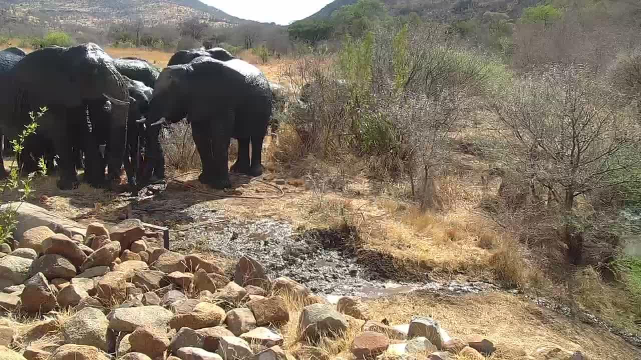 VIDEO: Elephants vs. Warthog over fresh water hose