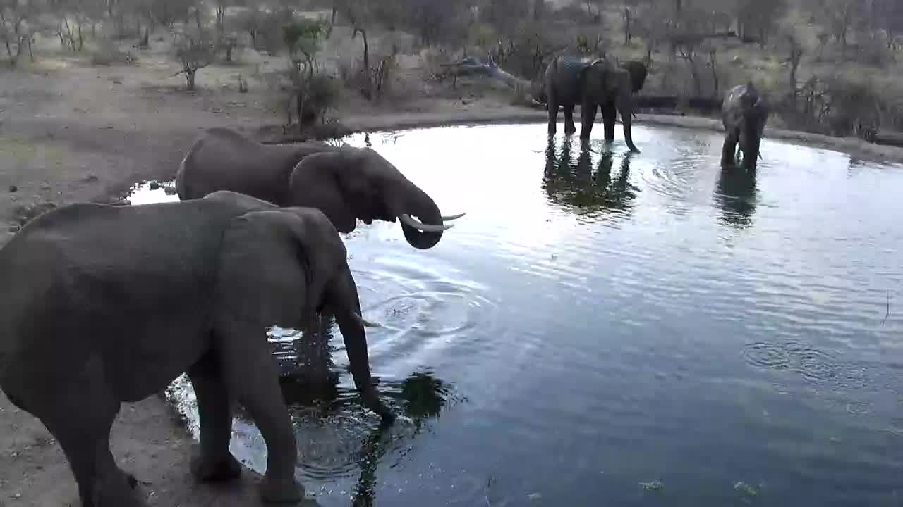VIDEO: Elephants enjoying the water