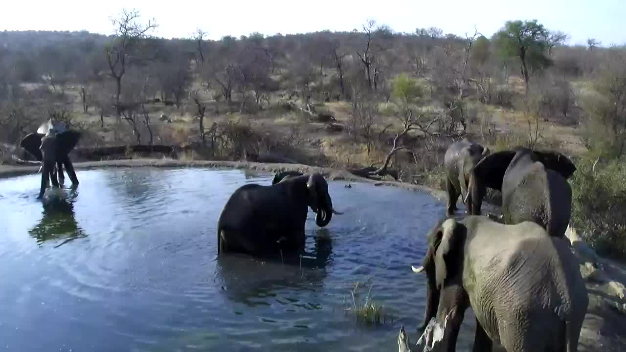 VIDEO: Elephants cooling off in the waterhole