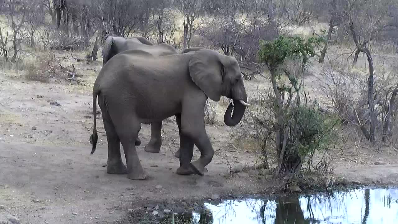 VIDEO: Three Elephants around the waterhole.