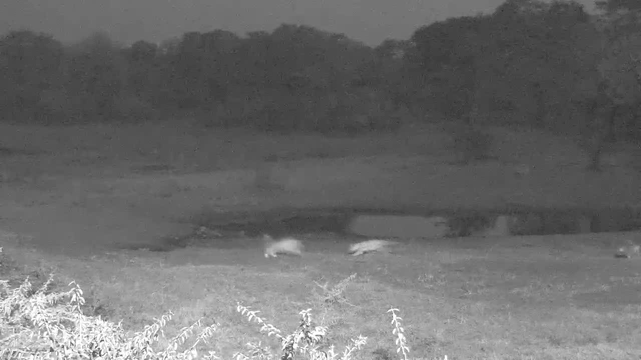 VIDEO:Lion pride enjoying cool weather