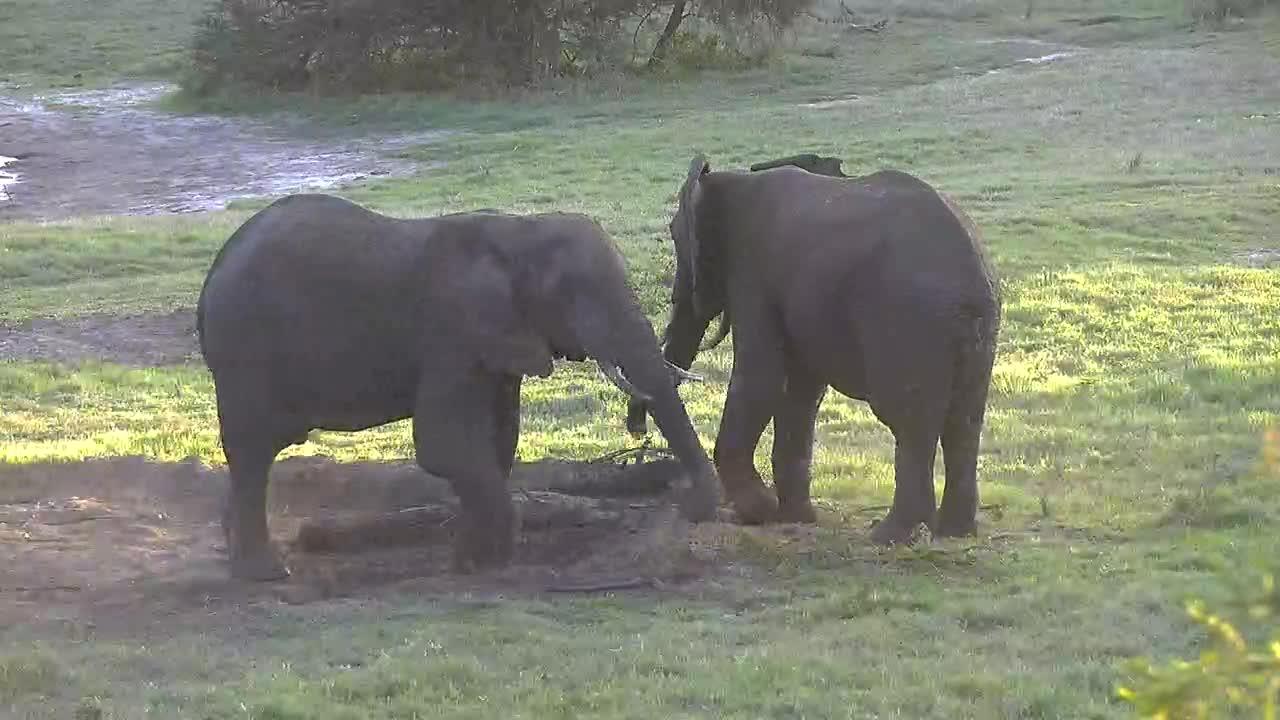 VIDEO: Pair of Elephant bulls having some fun