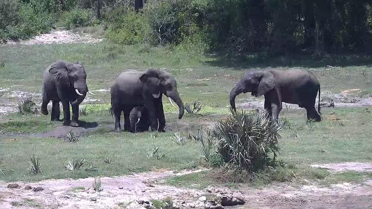 VIDEO: Elephant bulls doing a bit of wrestling