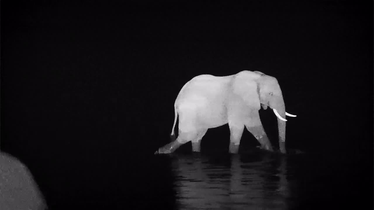 VIDEO: Elephant crossing the Olifants River to get to the other side