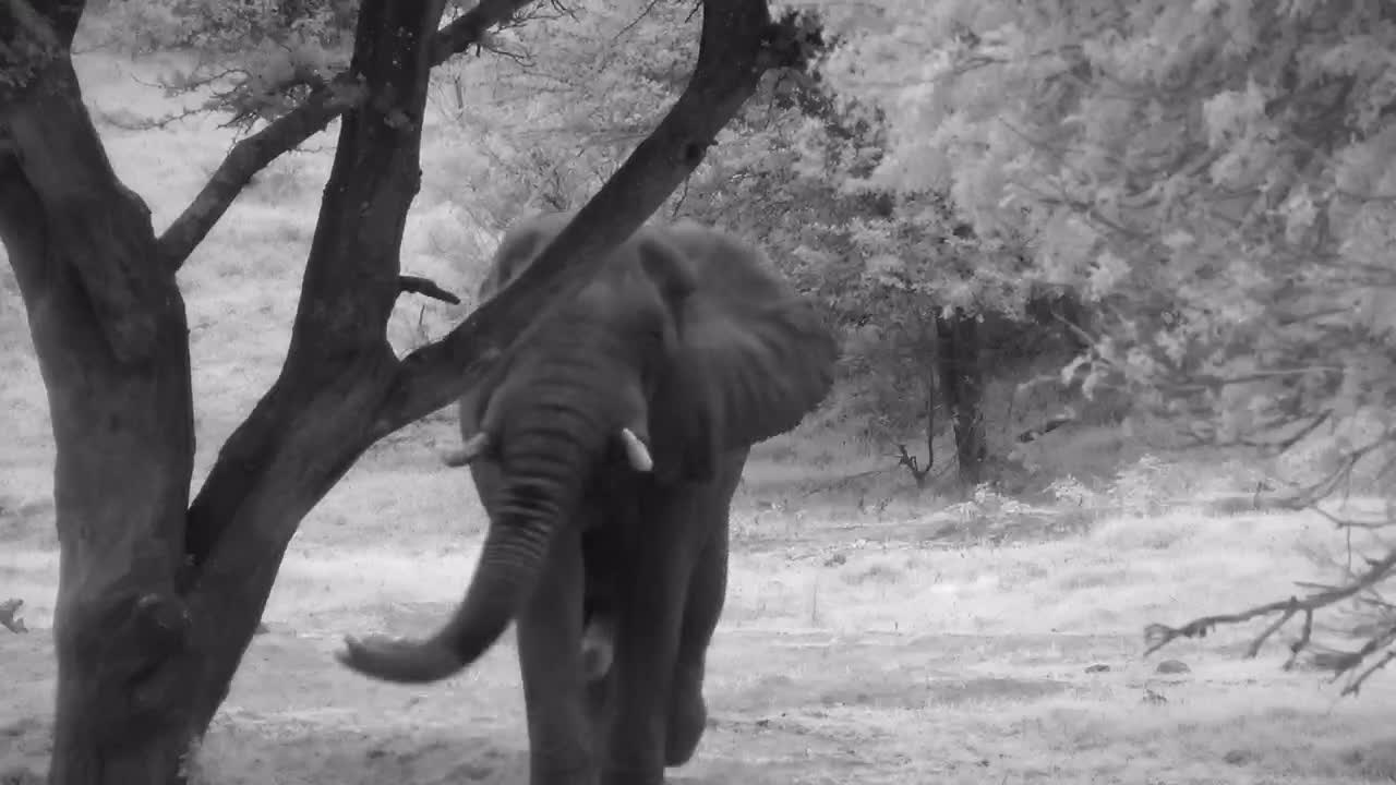 VIDEO: Elephant having a dust bath and a drink of water