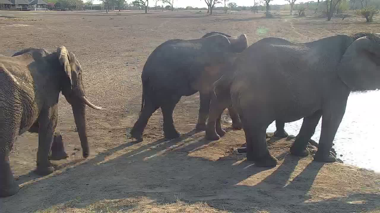 VIDEO: Elephants came to the waterhole for a drink