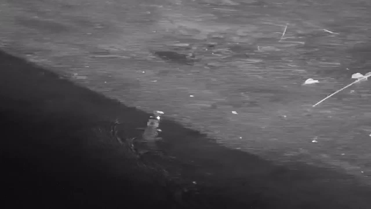 VIDEO: Chasing a baby Crocodile along the river bank