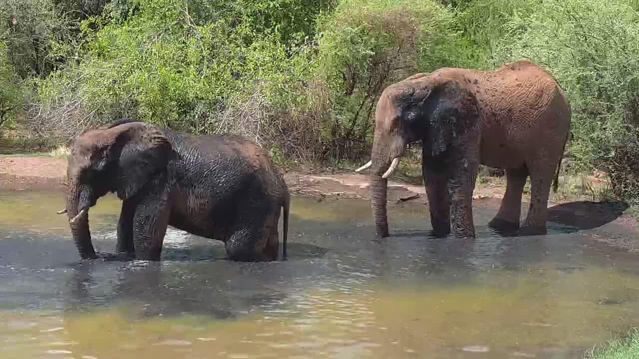 VIDEO: Elephants enjoy the water