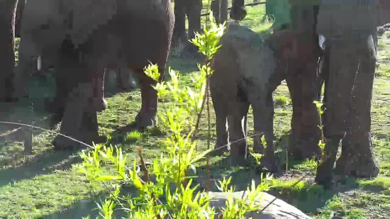 VIDEO: Breeding Herd Edgy Part 1