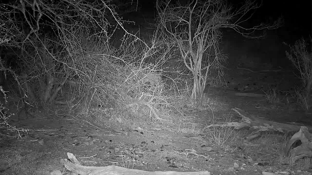 VIDEO: A young lion leaves the waterhole