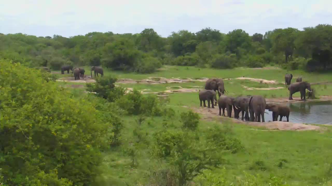 VIDEO:Elephants at Tembe