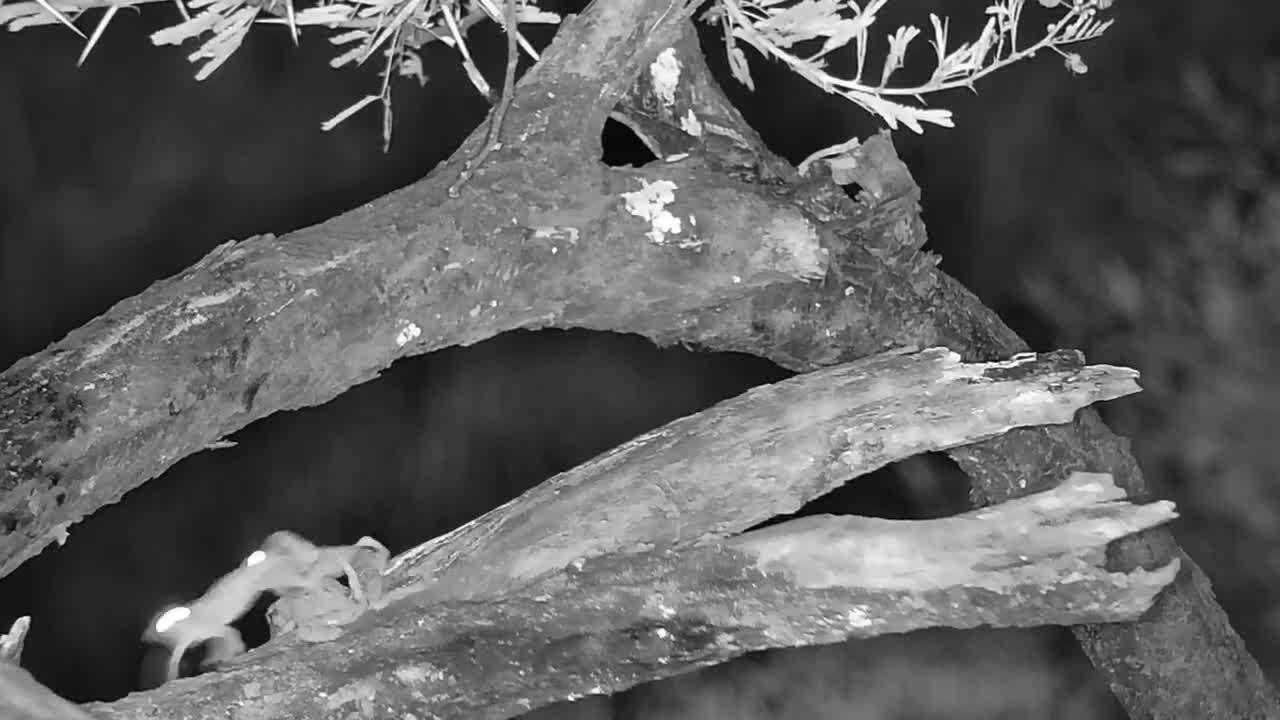VIDEO: Frog's 'Ménage à trois'