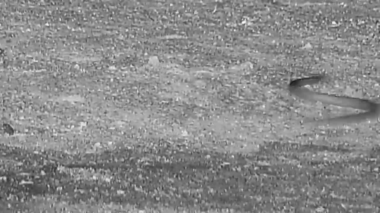 VIDEO: Small Snake crawling near the waterhole