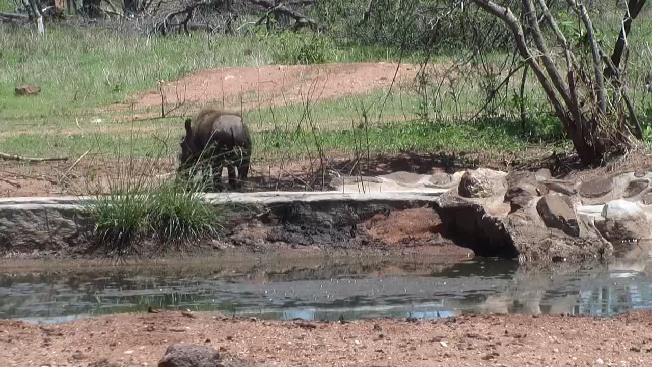 VIDEO: Heat relieve for Warthog and Zebras