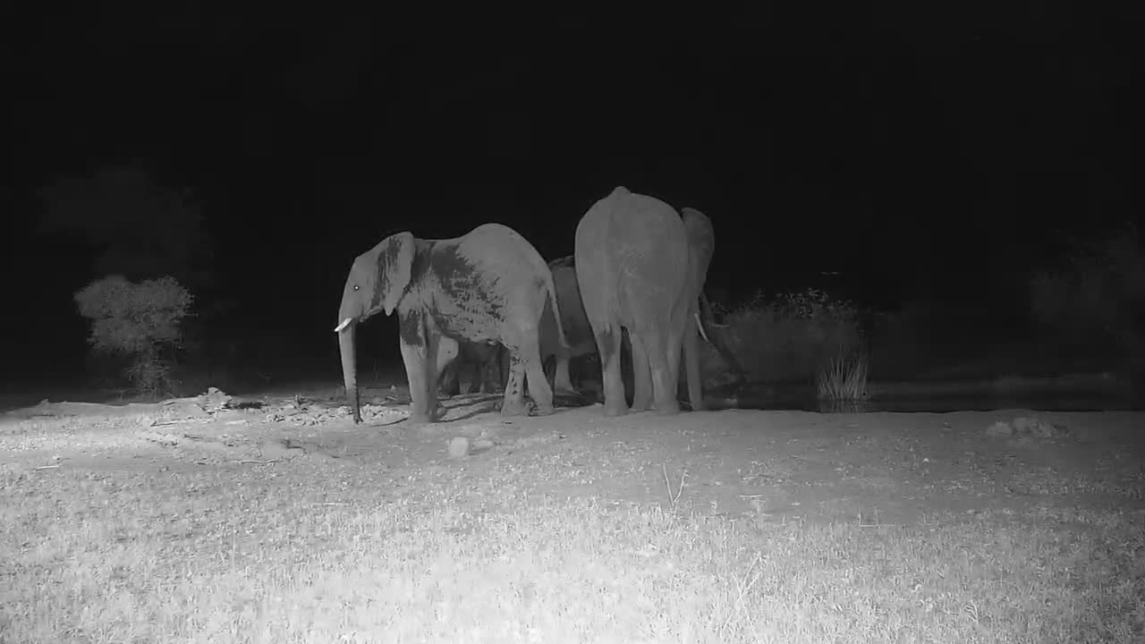 VIDEO: Small Elephant herd Pt 1 of 2