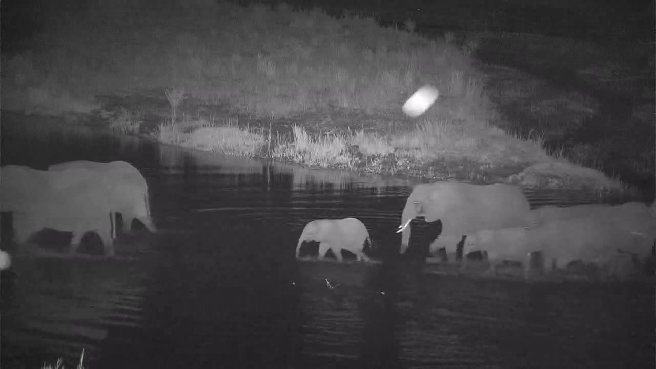 VIDEO: Little Elephant Group cross the River