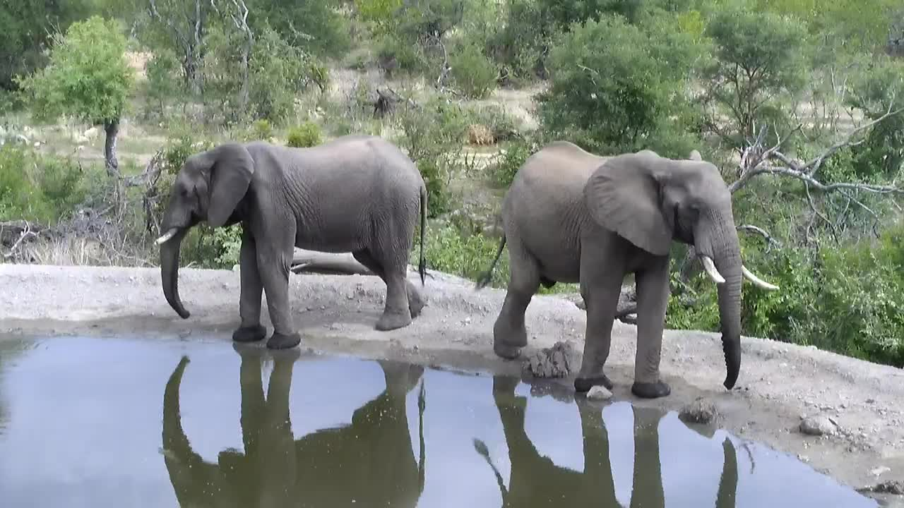 VIDEO: Two young Elephants drink and leave