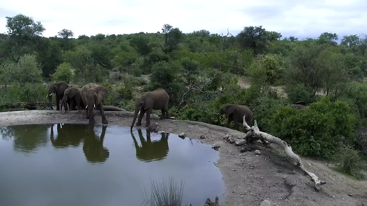 VIDEO: Elephants make a brief visit to the waterhole
