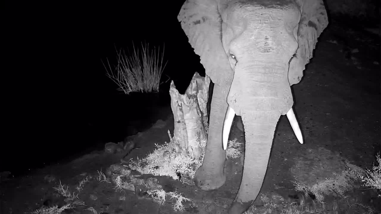 VIDEO: Elephant stops in for a drink