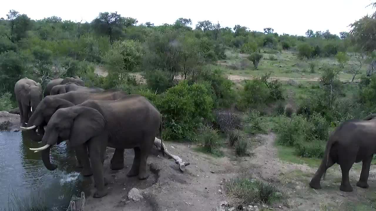VIDEO:  Elephant family having a drink together