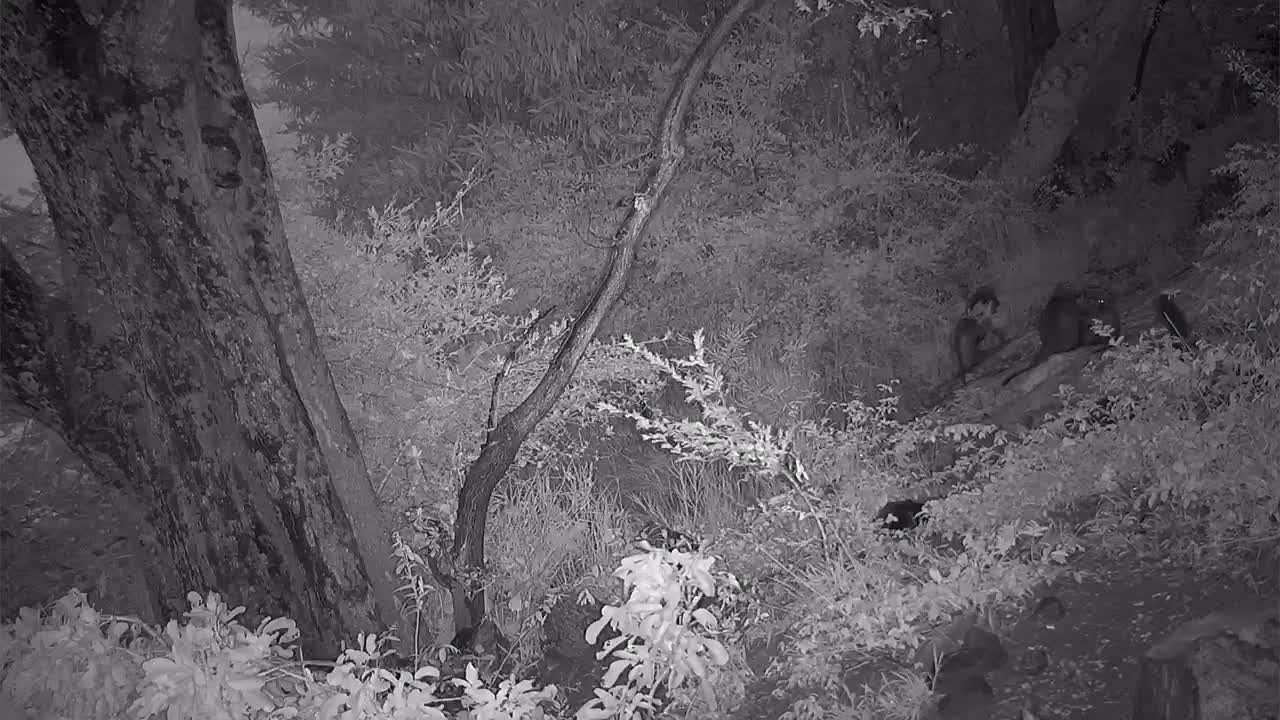 VIDEO: Baboons coming down from tree while other Baboons  send alerts