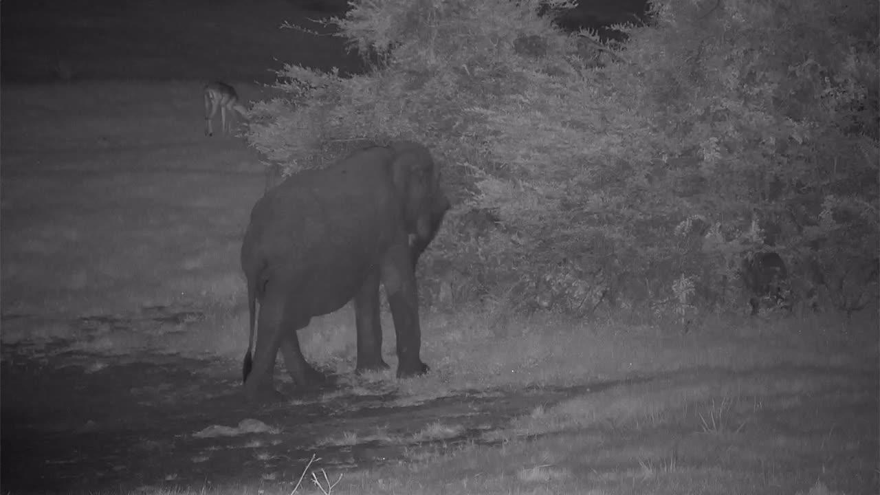 VIDEO: Elephant's night-time visit