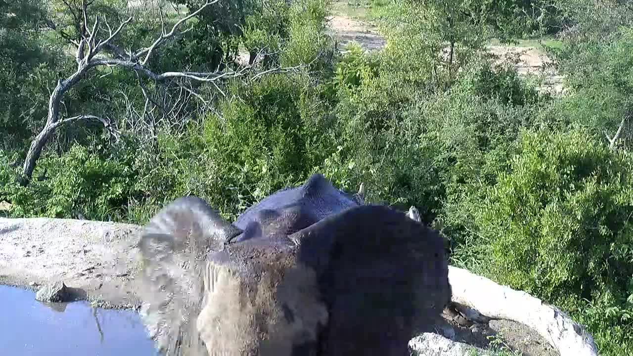 VIDEO: Elephant came for a drink and shower to the waterhole