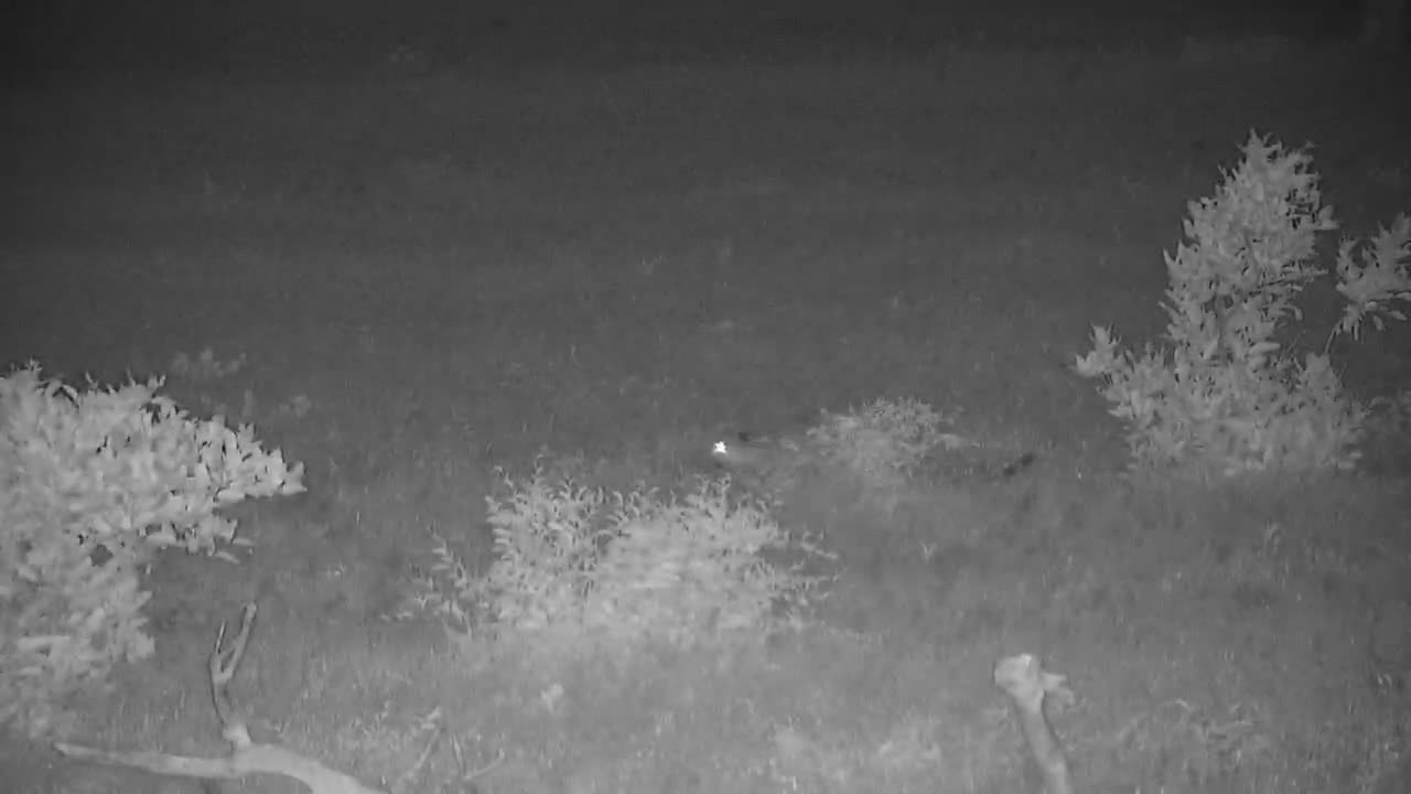 VIDEO: Leopard Hunting (No audio)