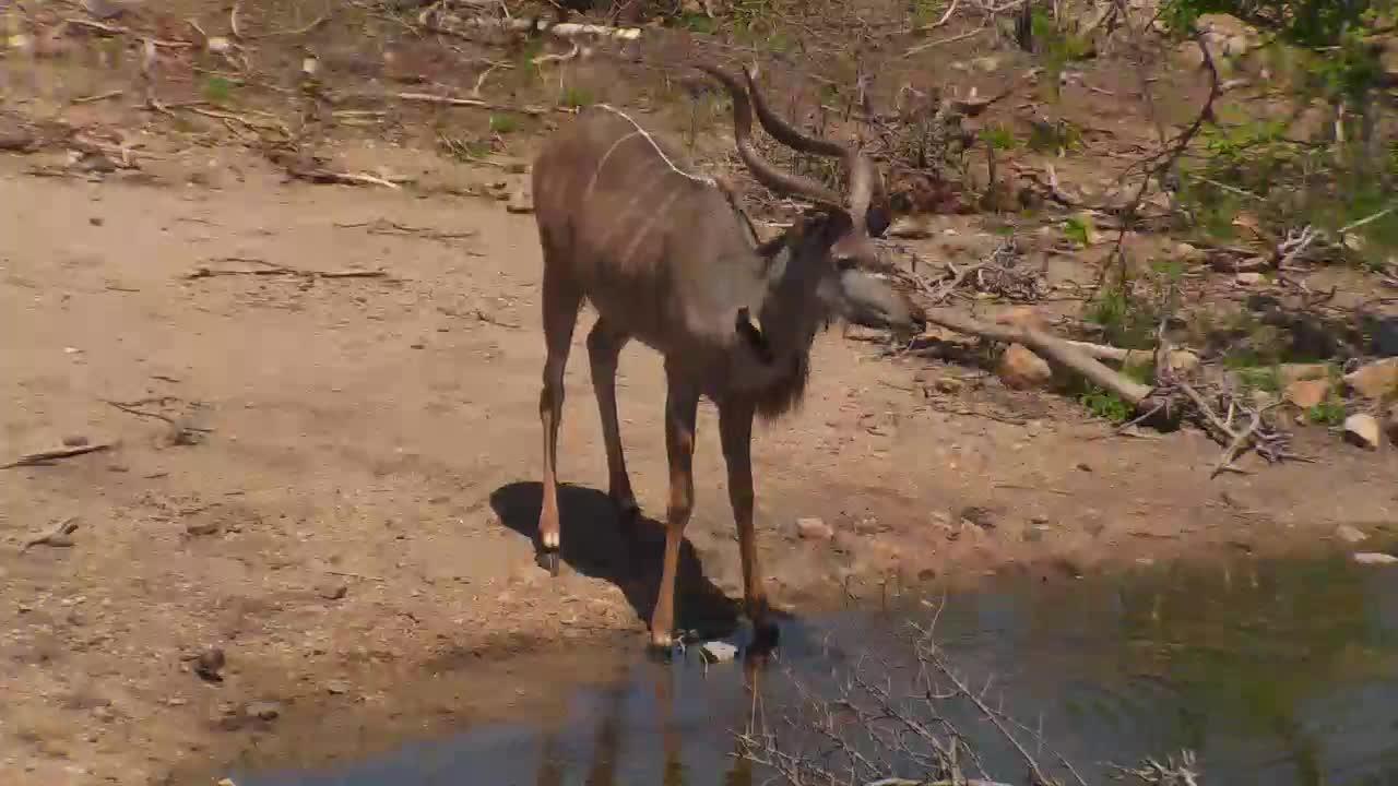 VIDEO:Kudus at Naledi