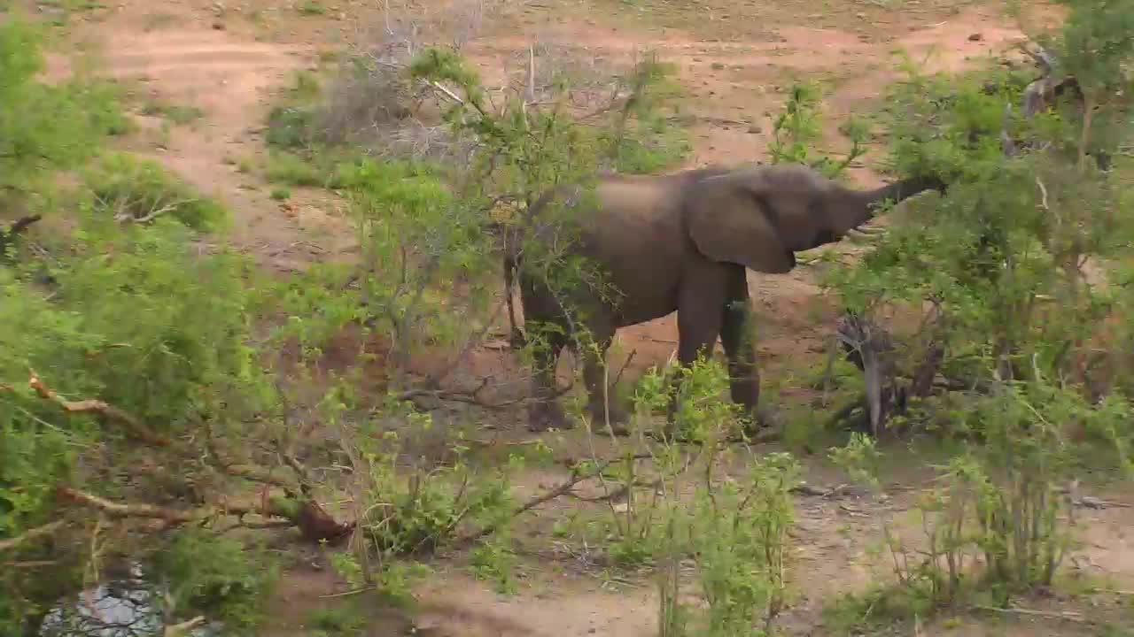 VIDEO:Elephant at Naledi