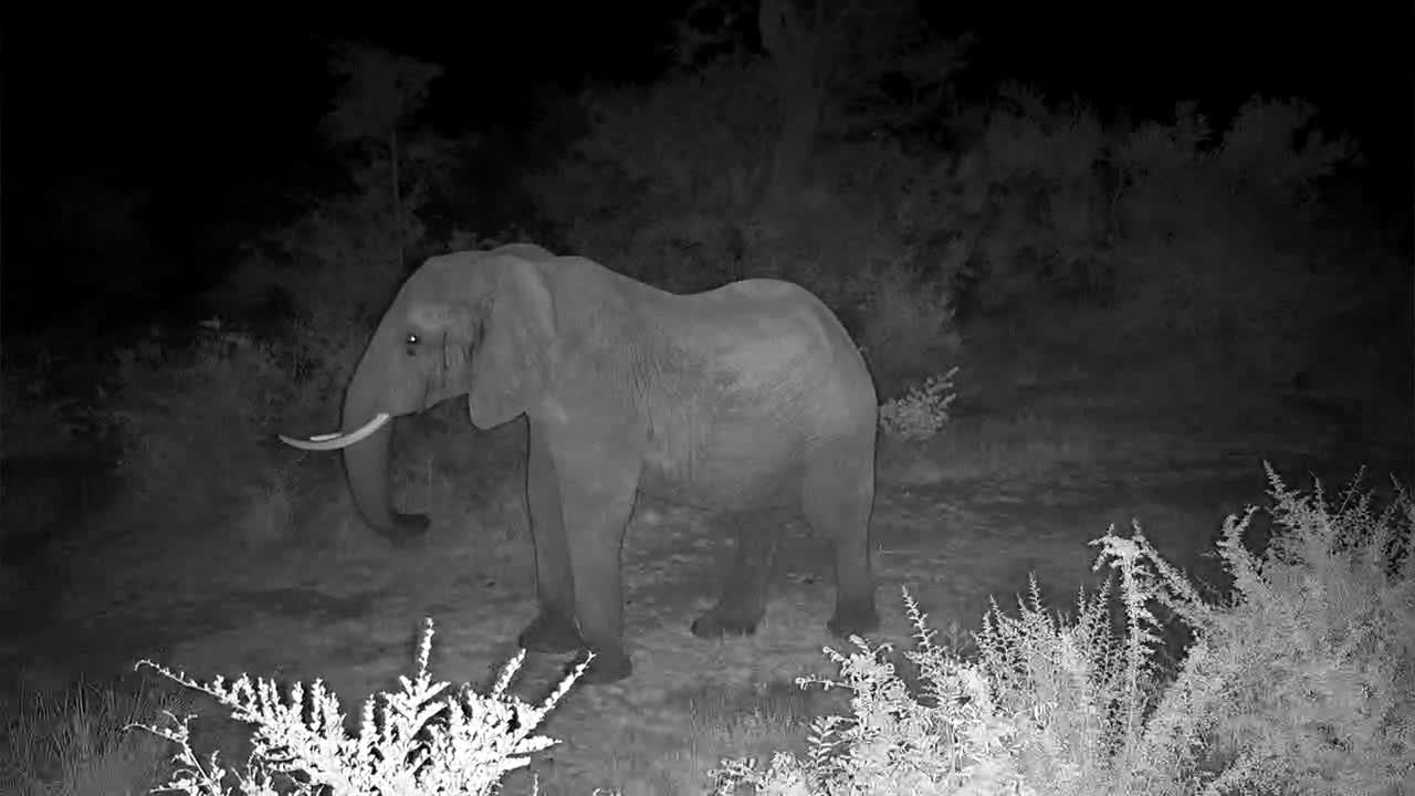 VIDEO: Elephant stops by to say hello
