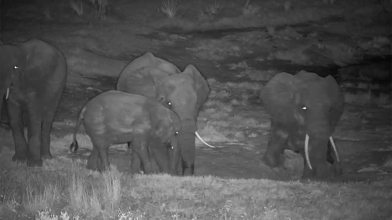 VIDEO: Elephants searching for fresh Water